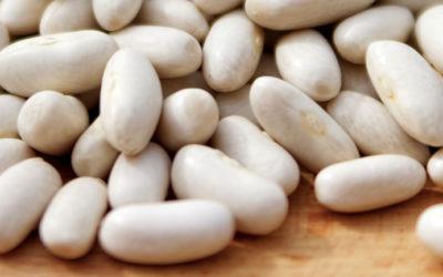 La Mogette de Vendée, un produit de qualité